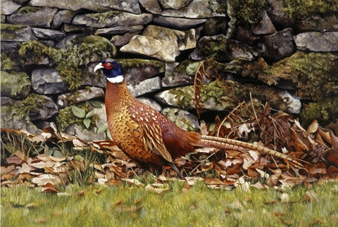 Country living pheasant bird wildlife art print animal art artist Jacqueline Gaylard