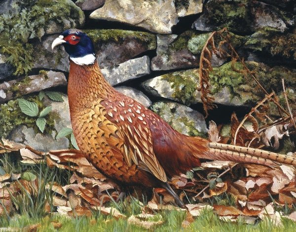 Country living pheasant bird wildlife art print detail animal art artist Jacqueline Gaylard