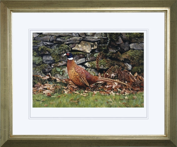 Country living pheasant bird wildlife art print framed animal art artist J. Gaylard