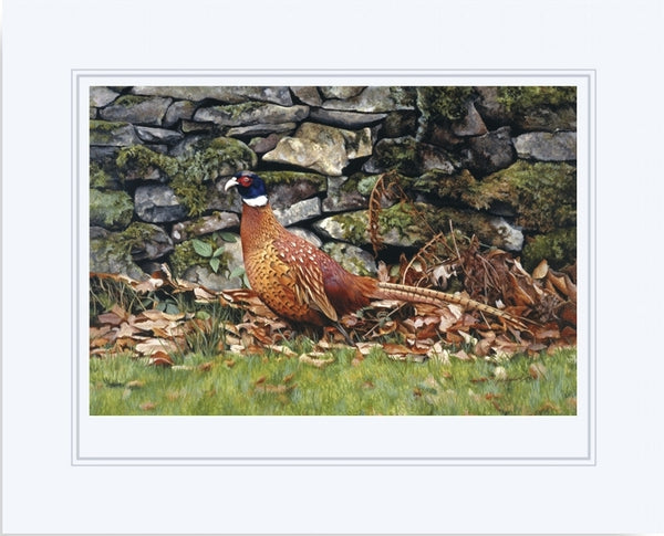 Country living pheasant bird wildlife art print mounted animal art artist J. Gaylard