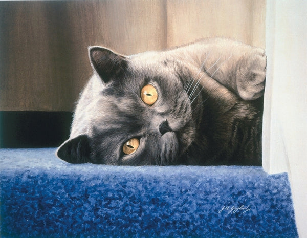 Cyan on the stair british shorthair blue grey cat art print animal art artist J. Gaylard
