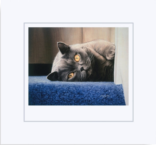 Cyan on the stair british shorthair blue grey cat art print mounted animal art artist J. Gaylard