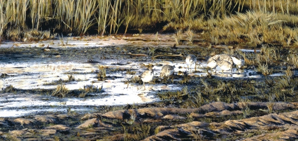 Evening knot birds wildlife art print detail landscape painting artist Jacqueline Gaylard