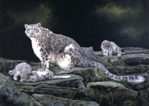 Keeping Watch snow leopard and kittens big cat wildlife art print artist J. Gaylard.