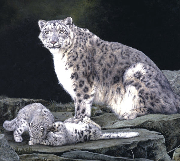 Keeping Watch snow leopard and kittens big cat wildlife art print detail artist J. Gaylard.