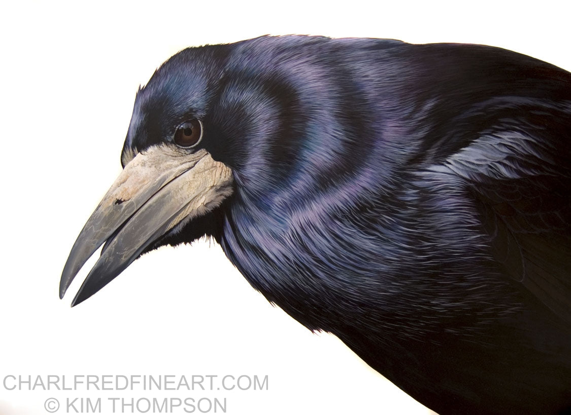'The Rook' bird- Acrylic painting