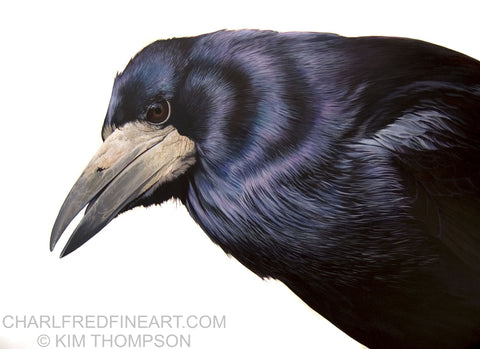 'The Rook' Bird- Animal Art