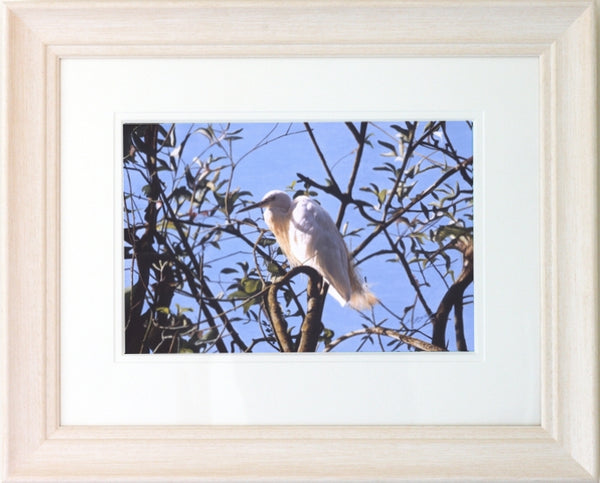 Little Egret white heron bird painting acrylic framed animal art artist Jacqueline Gaylard.