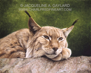 Looking Out Northern Lynx big cat animal art acrylic painting artist J. Gaylard
