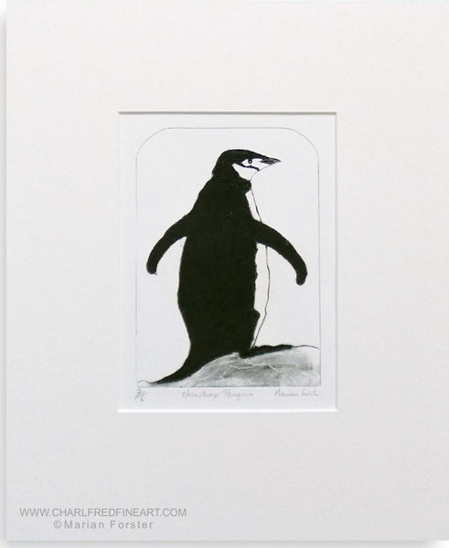 Chinstrap penguin animal art print by Marian Forster.