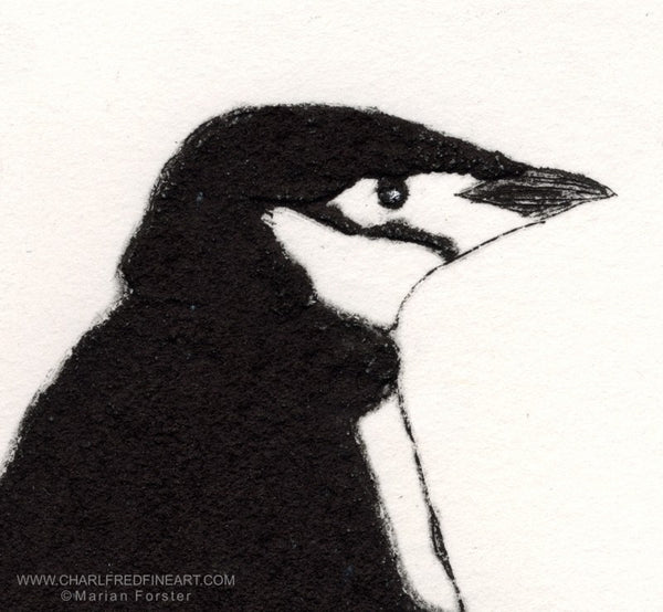 Chinstrap penguin wildlife animal art print by Marian Forster.