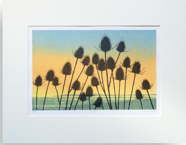 Teasel flower landscape limited print by Marian Forster.