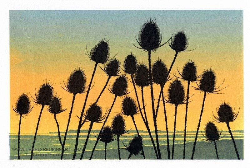 Teasel flower limited edition print by Marian Forster.