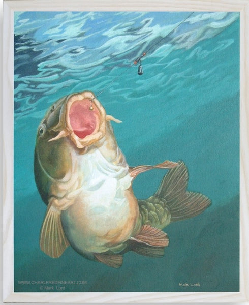 Strike 3 Mirror Carp fish animal art framed by Mark Lord.
