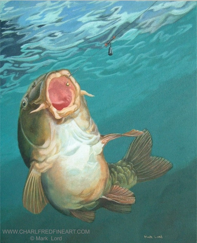 Strike 3 Mirror Carp fish animal art painting by Mark Lord.