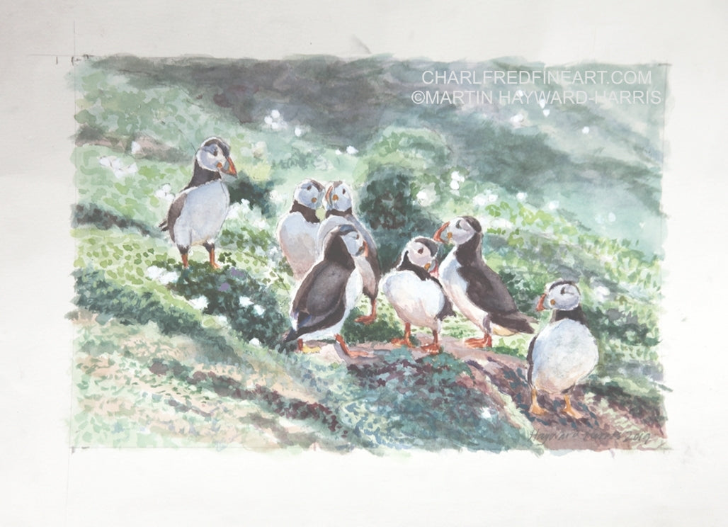 'Billing Puffins' Birds - Watercolour Painting