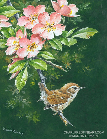 'Wren & Roses' - Bird Painting