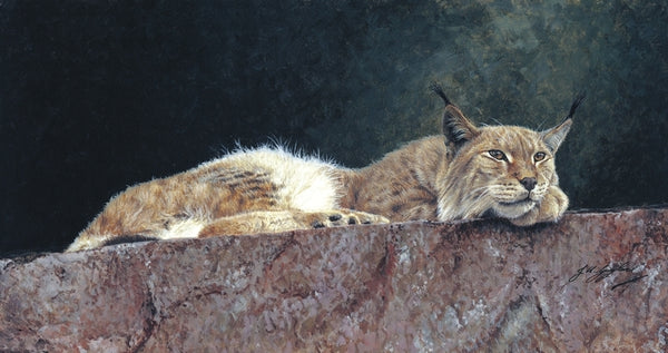 Northern Lynx wildlife art print big cat animal art artist Jacqueline Gaylard