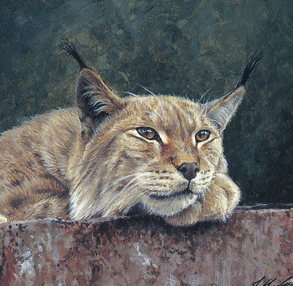 Northern Lynx wildlife art print detail animal art artist Jacqueline Gaylard