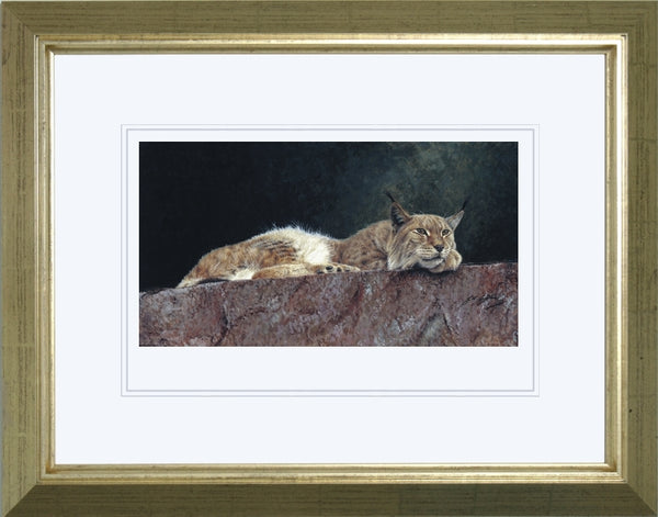 Northern Lynx wildlife art print framed animal art artist Jacqueline Gaylard