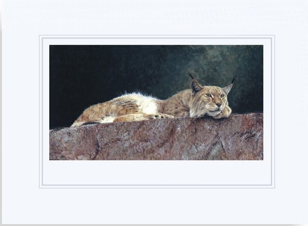 Northern Lynx wildlife art print mounted animal art artist Jacqueline Gaylard