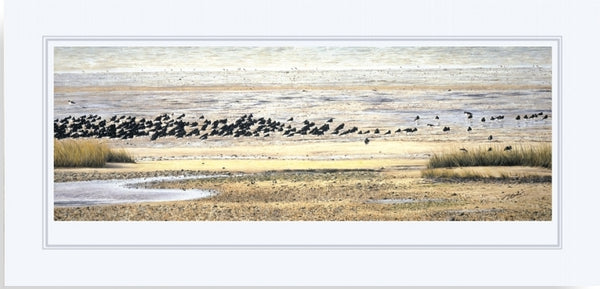 Oystercatcher birds wildlife art print mounted animal art artist J. Gaylard