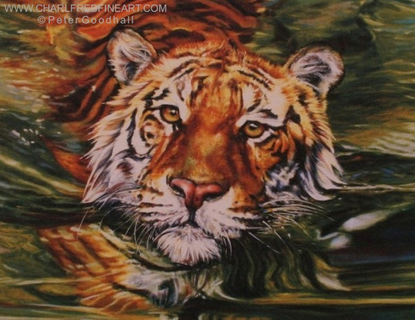 Golden Eyes Tiger animal art print of a Tiger swimming in water.