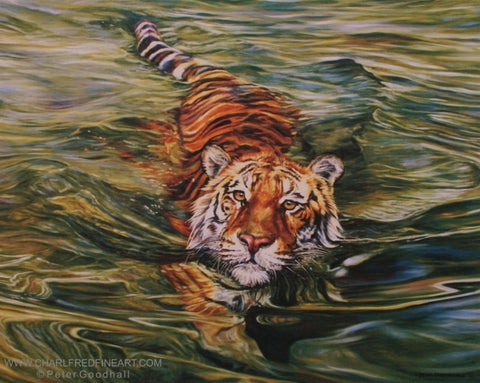 Golden Eyes Tiger wildlife art print.  Tiger swimming in water.