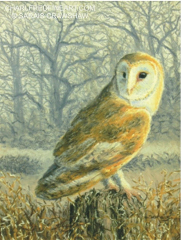 'Hunter At Dusk' Barn Owl Pastel bird painting by Sarais Crawshaw.