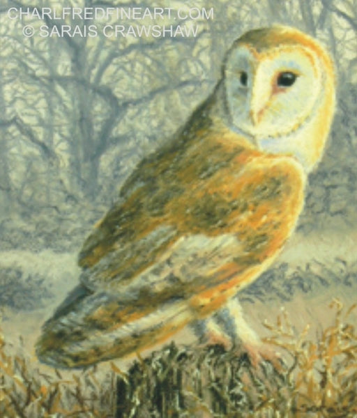 'Hunter At Dusk' Barn Owl Pastel bird painting detail by Animal artist Sarais Crawshaw.