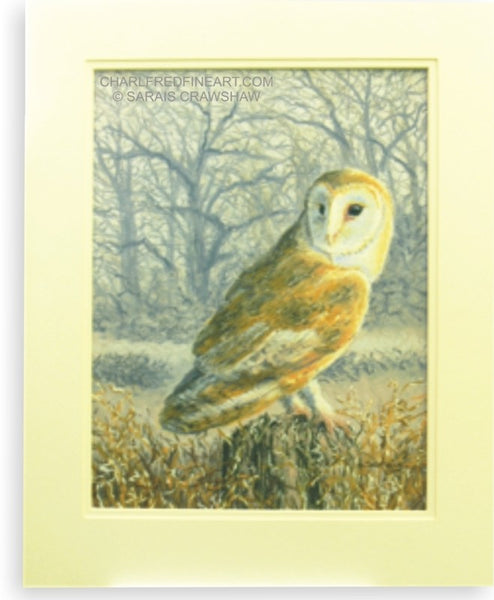 'Hunter At Dusk' Barn Owl Mounted Pastel bird painting by Sarais Crawshaw.