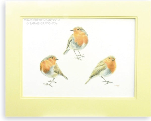 Keeping an Eye on You, Robin bird colour pencil drawing (mounted). Animal art painting by Sarais Crawshaw.