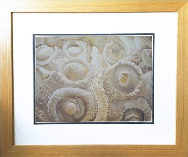Sea urchin fossil wall art acrylic nautical art framed painting artist carole gaylard.