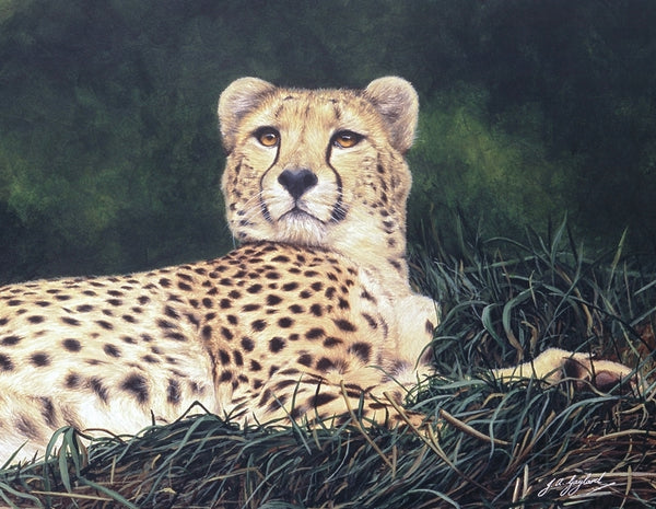 The Distraction Cheetah big cat art print detail animal art artist J. Gaylard