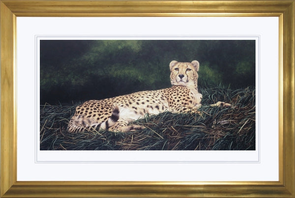The Distraction Cheetah big cat art print framed animal art artist J. Gaylard