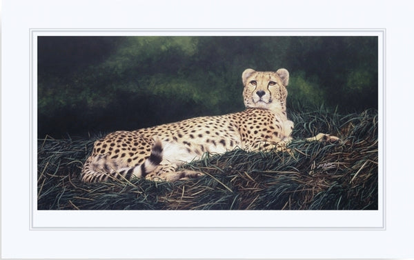 The Distraction Cheetah big cat art print mounted animal art artist Jacqueline Gaylard