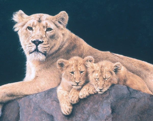 Watchful Asiatic Lioness with cubs wildlife art print detail animal art cat artist J. Gaylard