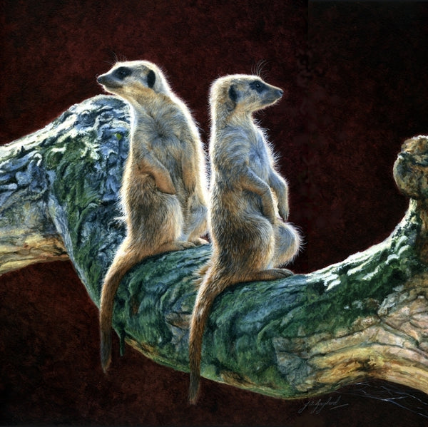 Who Goes There? Meerkats acrylic animal art painting wildlife artist Jacqueline Gaylard.