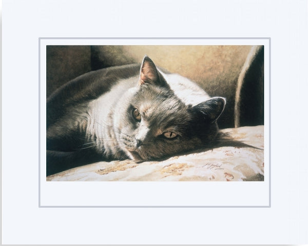 A Place In The Sun British Shorthair Blue Cream Cat Art Print mounted Jacqueline Gaylard.
