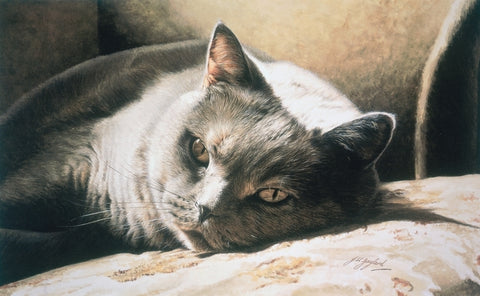 A Place In The Sun British Shorthair Blue Cream Cat Art Print artist Jacqueline Gaylard.