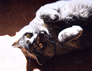 A Ray Of Sunshine British Shorthair Blue Cream cat art J. Gaylard.