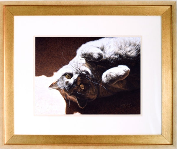 A Ray Of Sunshine British Shorthair Blue Cream cat art by Animal artist J. Gaylard.