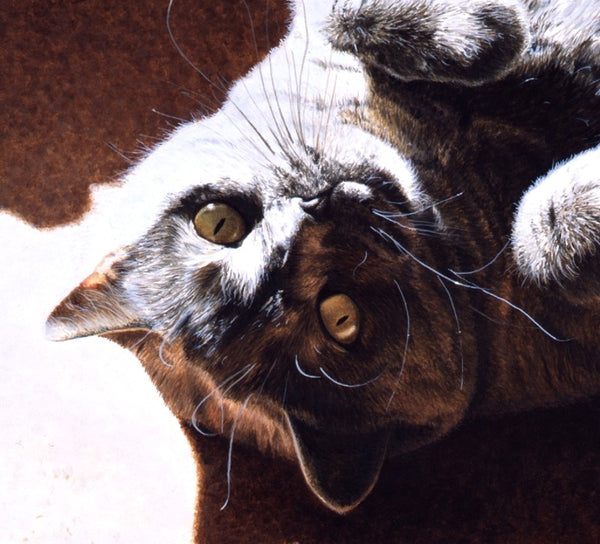 A Ray Of Sunshine British Shorthair Blue Cream cat artist J. Gaylard.