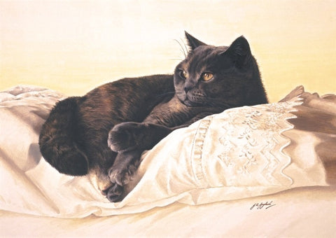 Bright Eyes british shorthair blue cream cat art print by Jacqueline Gaylard
