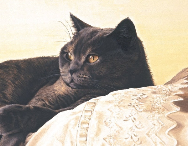 Bright Eyes British Shorthair Blue Cream cat art print detail, artist Jacqueline Gaylard.