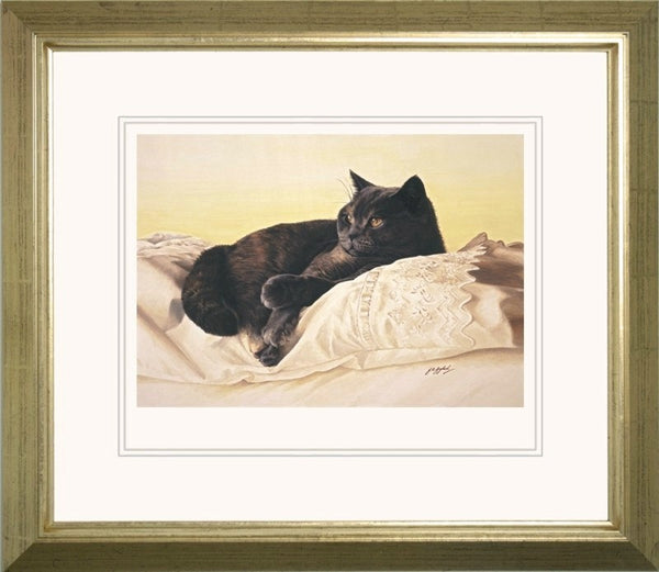 Bright Eyes British Shorthair Blue Cream cat art print framed, animal artist J. Gaylard.