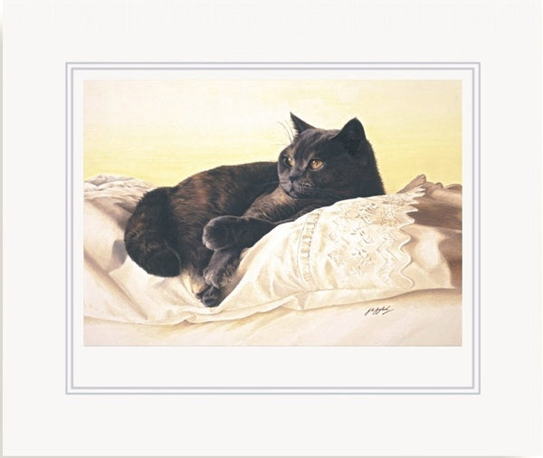 Bright Eyes British Shorthair Blue Cream cat art print mounted, by Jacqueline Gaylard.