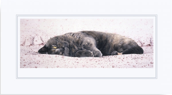 Chintz British Shorthair Blue Cream grey cat animal art print mounted, J. Gaylard.