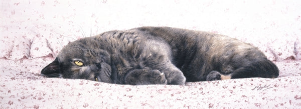 Chintz British Shorthair Blue Cream grey cat art print, artist J. Gaylard.