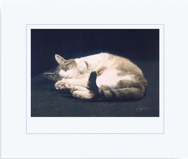Dreaming tabby cat art print, animal art by Jacqueline Gaylard.